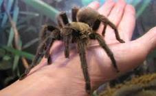 An arachnaphobe's delight!